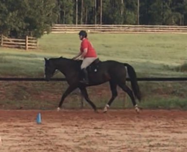 A little trotting!